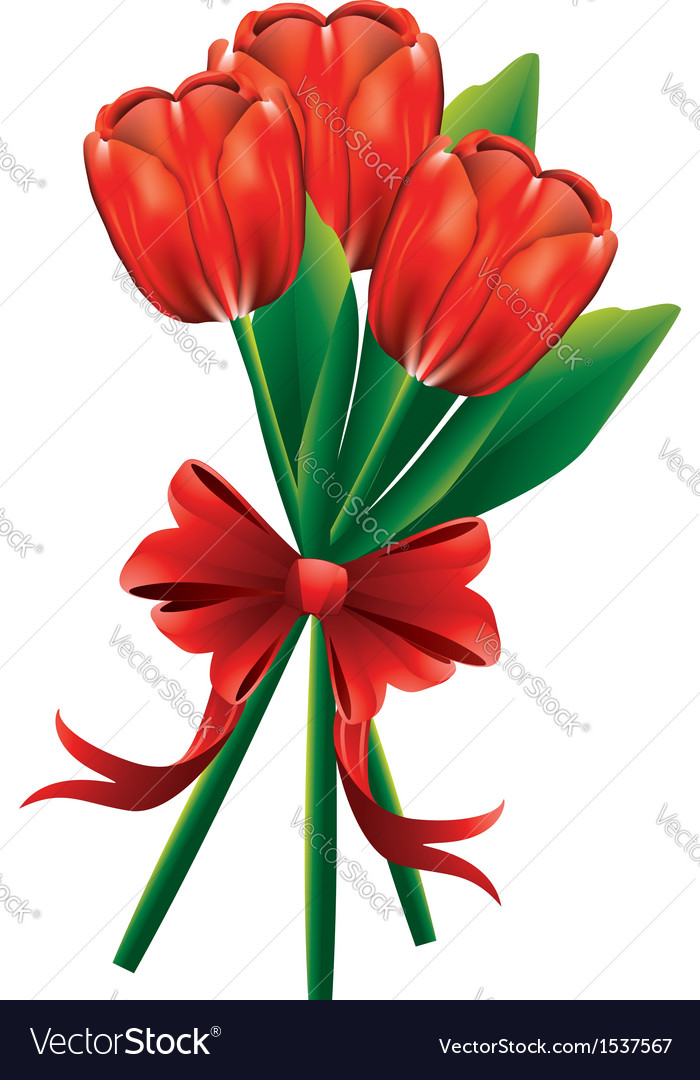 Tulip bouquet with red bow vector | Price: 1 Credit (USD $1)