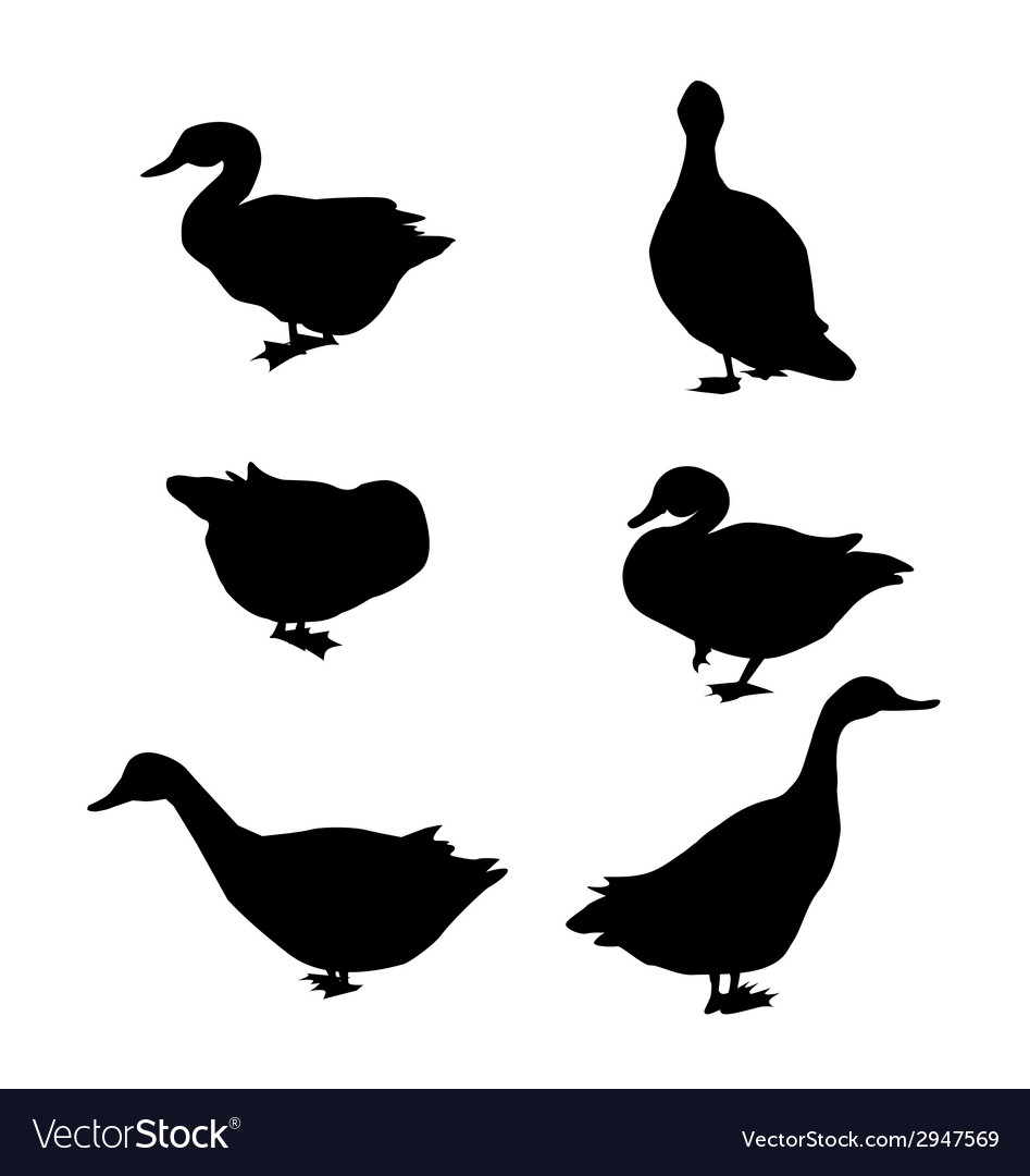 Duck silhouette set vector | Price: 1 Credit (USD $1)