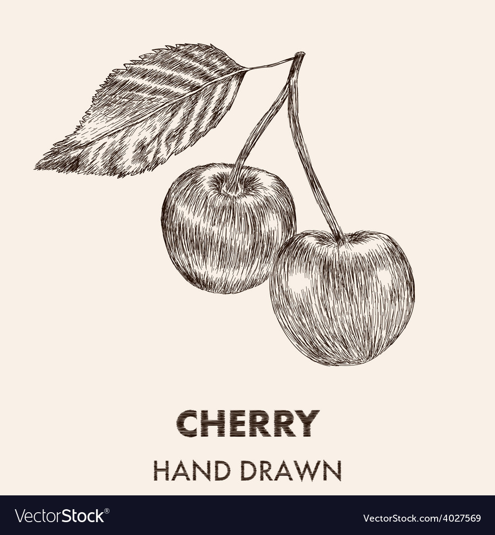 Sketch cherry hand drawn fruit collection vector | Price: 1 Credit (USD $1)