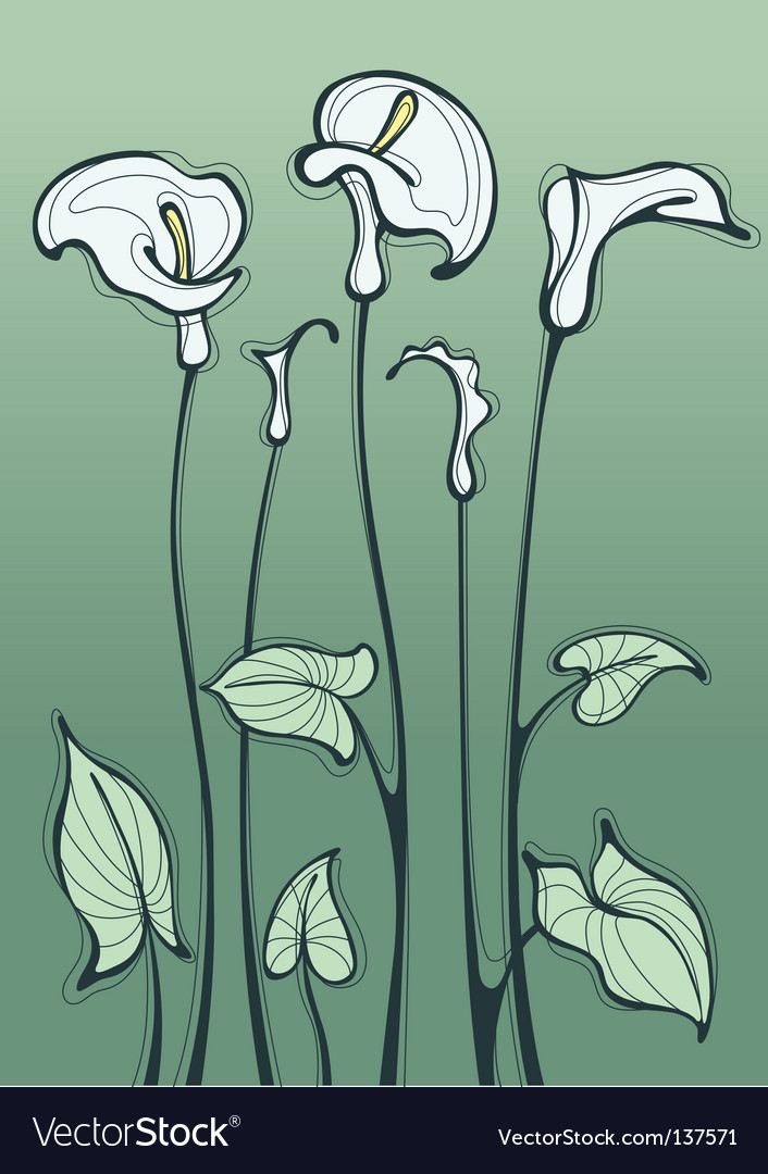 Calla lily vector | Price: 1 Credit (USD $1)