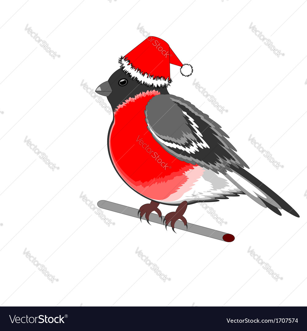 A christmas bullfinch on a white background vector | Price: 1 Credit (USD $1)