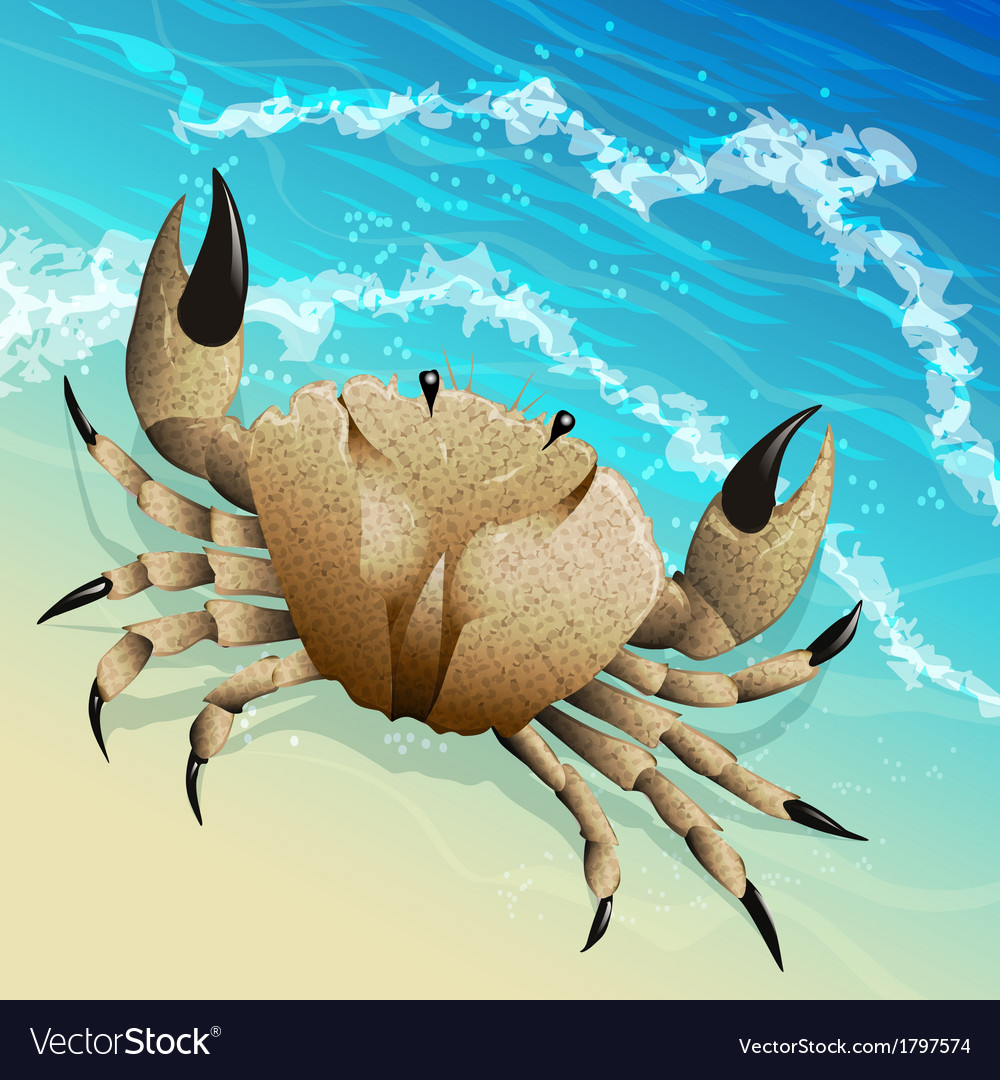 The crab vector | Price: 1 Credit (USD $1)