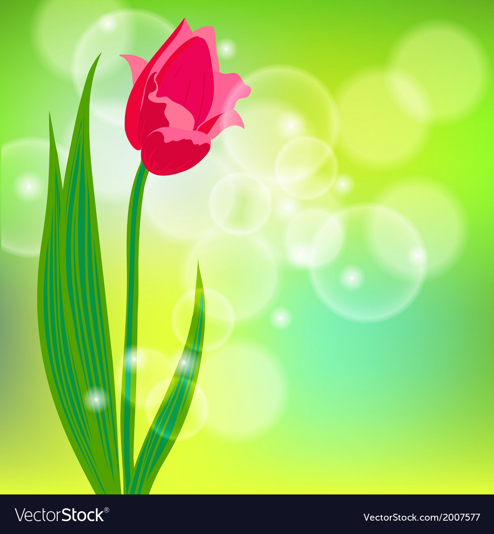 Card with red tulip on light green bokeh vector   Price: 1 Credit (USD $1)