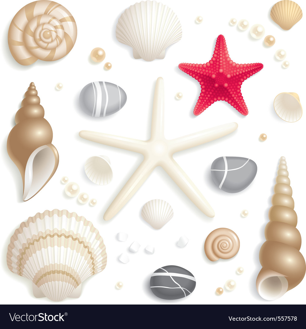 Seashell set vector | Price: 3 Credit (USD $3)