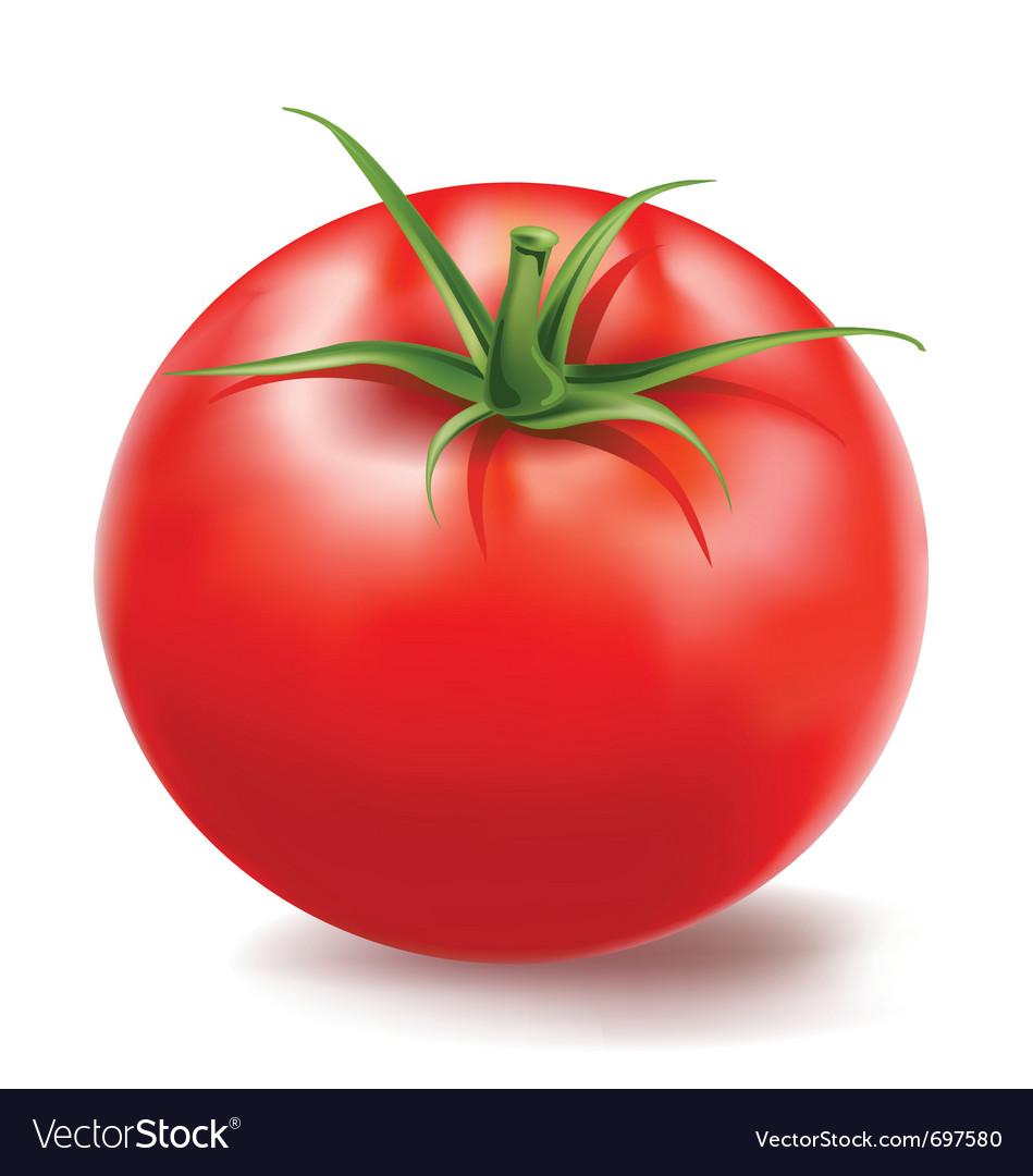Tomato vector | Price: 3 Credit (USD $3)