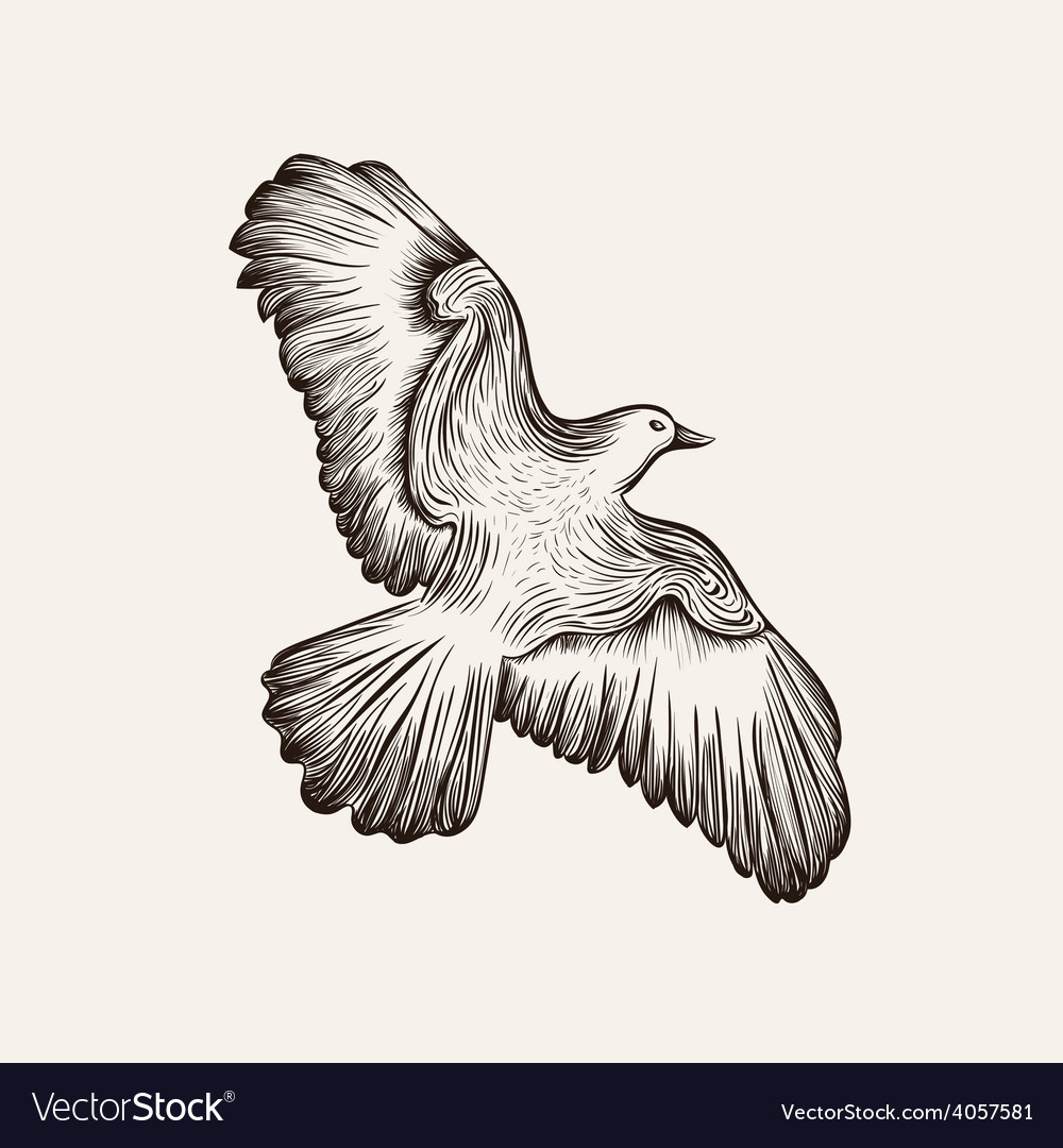 Sketch bird hand drawn vector | Price: 1 Credit (USD $1)