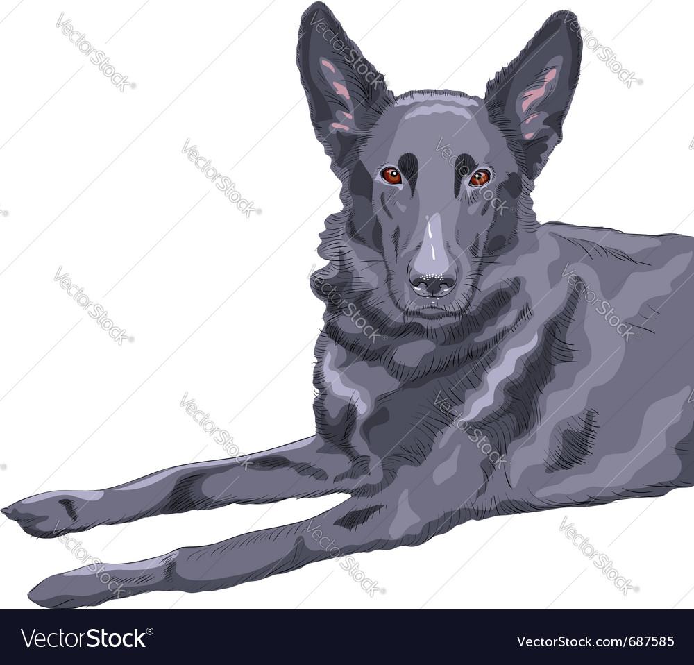 German shepherd vector | Price: 3 Credit (USD $3)