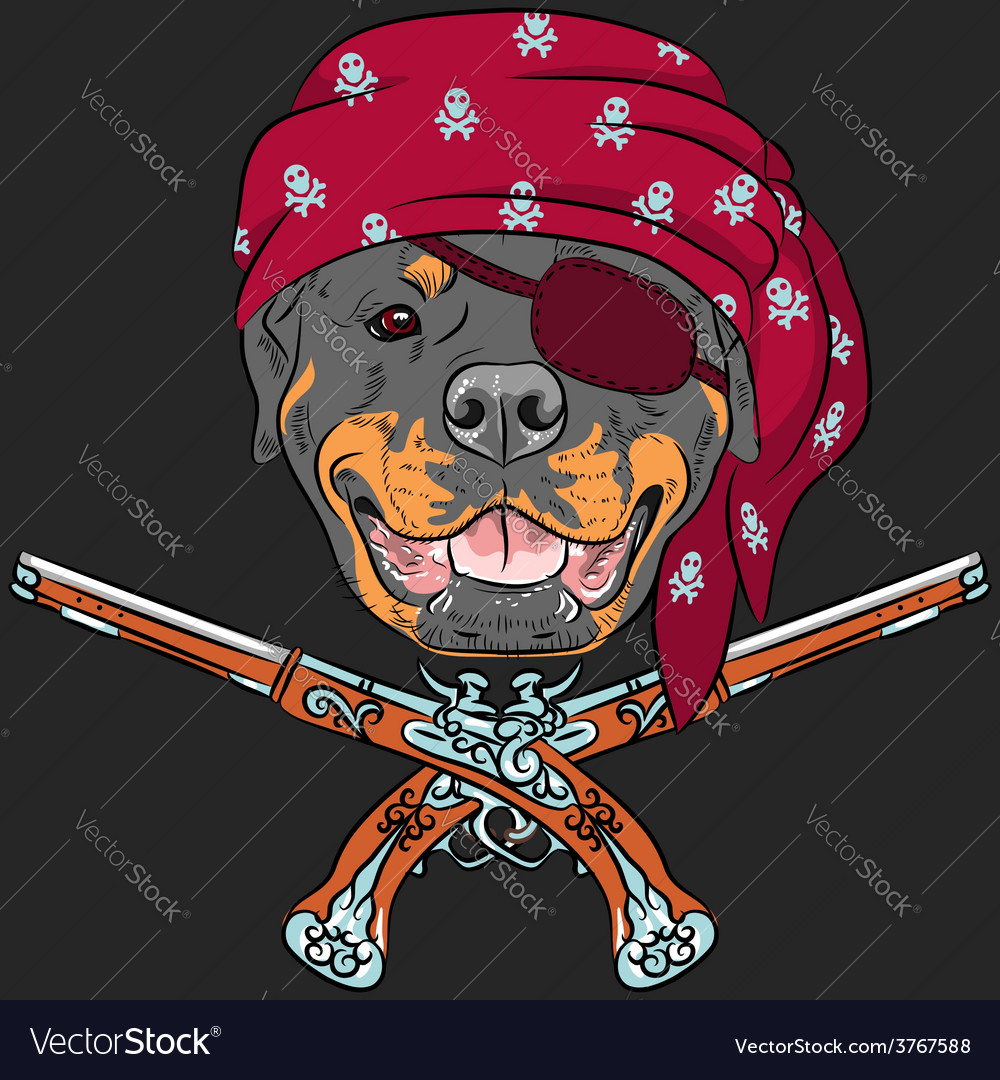 Dog rottweiler pirate with pistols vector | Price: 3 Credit (USD $3)