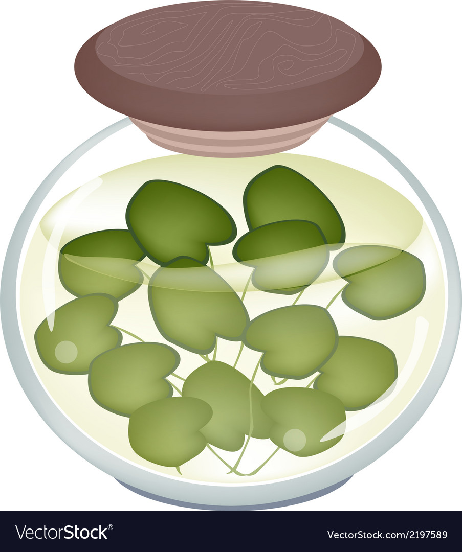 A jar of pickled common frogbit plant vector | Price: 1 Credit (USD $1)