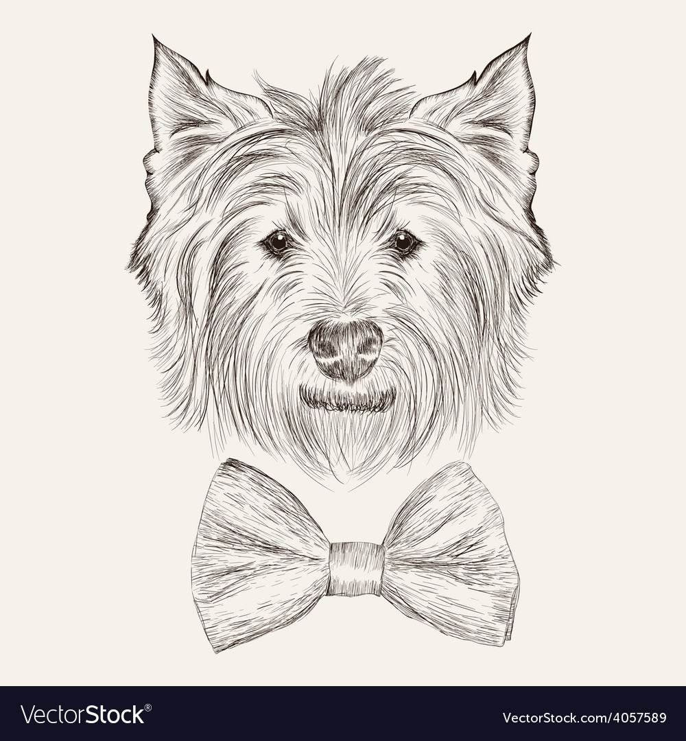 Sketchwest highland terrier with bow tie hand vector | Price: 1 Credit (USD $1)
