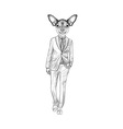 Sketchtoy terrier in suit hand drawn face of dog vector