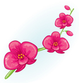 Pink prchid branch vector