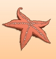 Detailed colored starfish vector