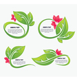 Leaves and flower vector
