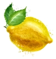 Lemon logo design template food or fruit vector