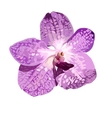 Violet orchid isolate pattern on white vector
