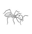 Sketch of the ant vector