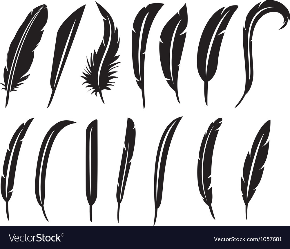 Collection of feathers - feather collection vector | Price: 1 Credit (USD $1)