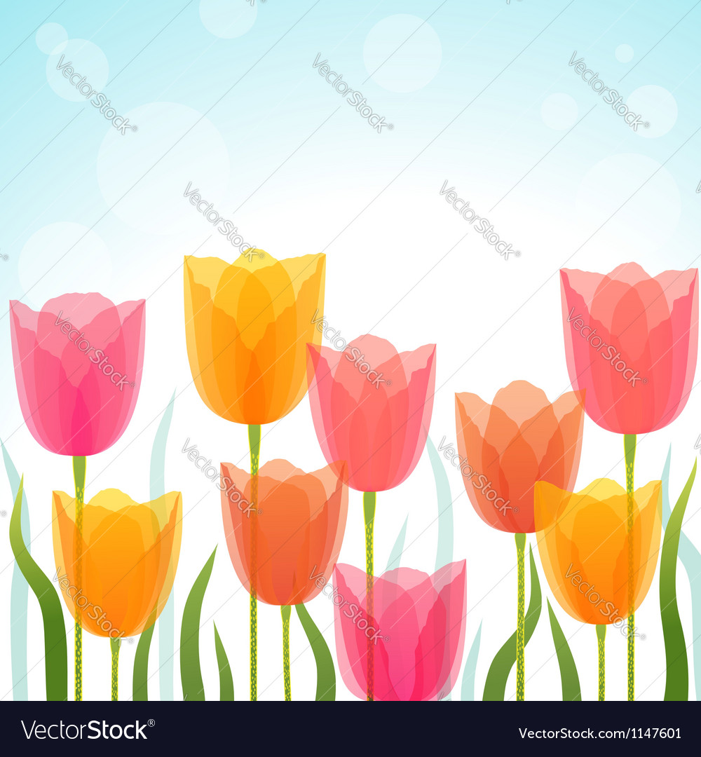Tulip background vector | Price: 1 Credit (USD $1)