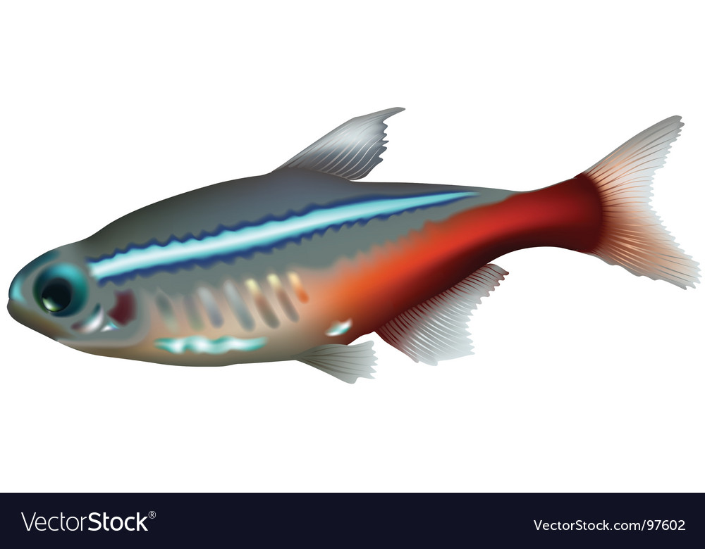 Neon tetra vector | Price: 1 Credit (USD $1)