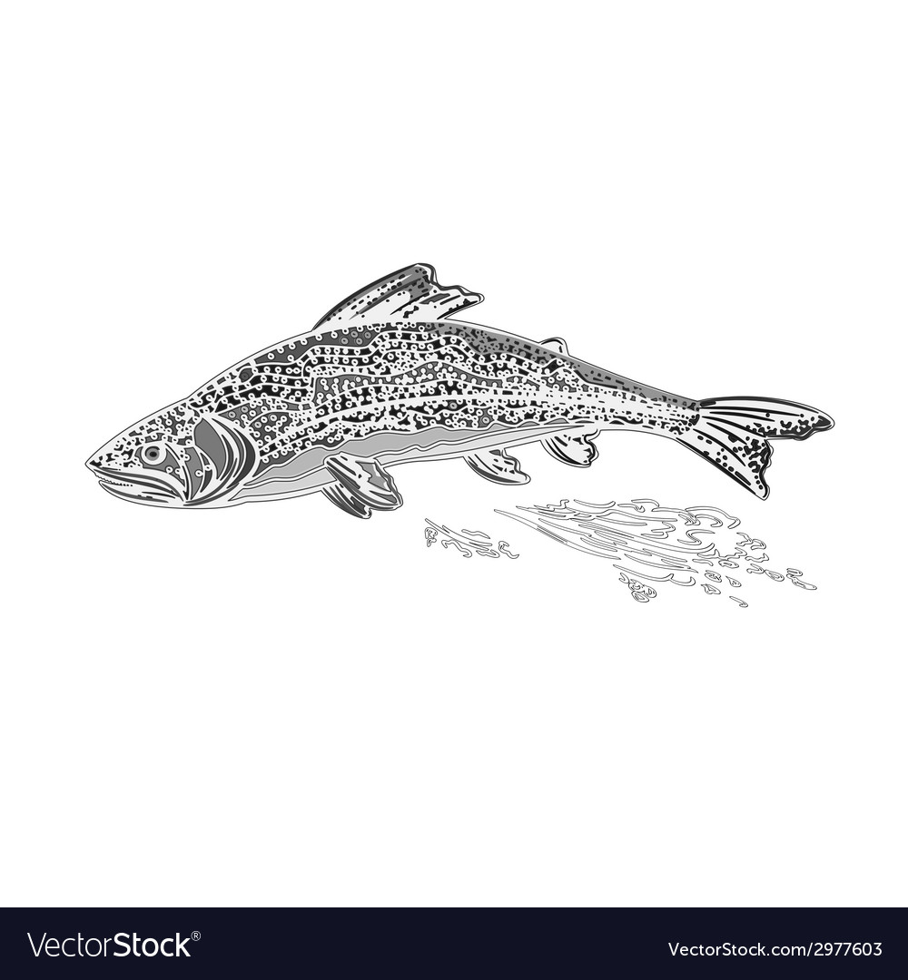 Rainbow trout as vintage engraved vector | Price: 1 Credit (USD $1)