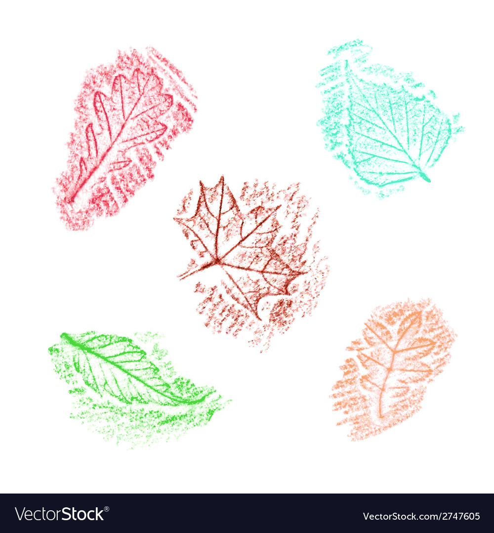 Pencil drawing of leaves vector | Price: 1 Credit (USD $1)