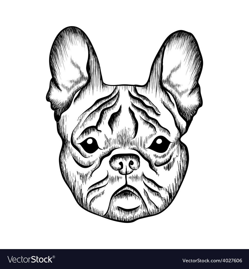 Sketch french bulldog hand drawn vector | Price: 1 Credit (USD $1)