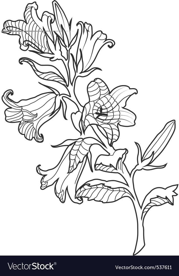 Cornflower engraved vector | Price: 1 Credit (USD $1)