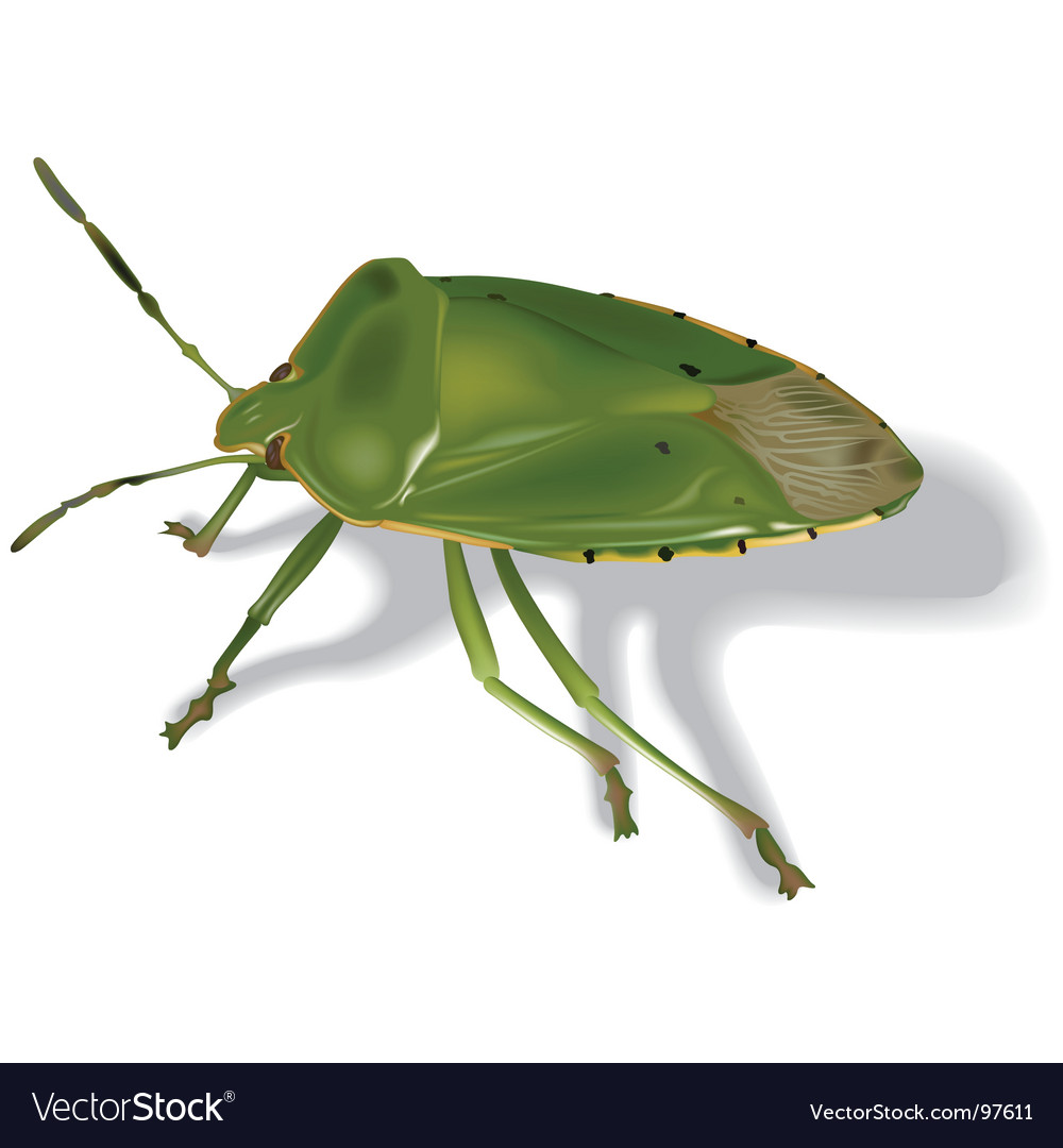 Stink bug vector | Price: 1 Credit (USD $1)