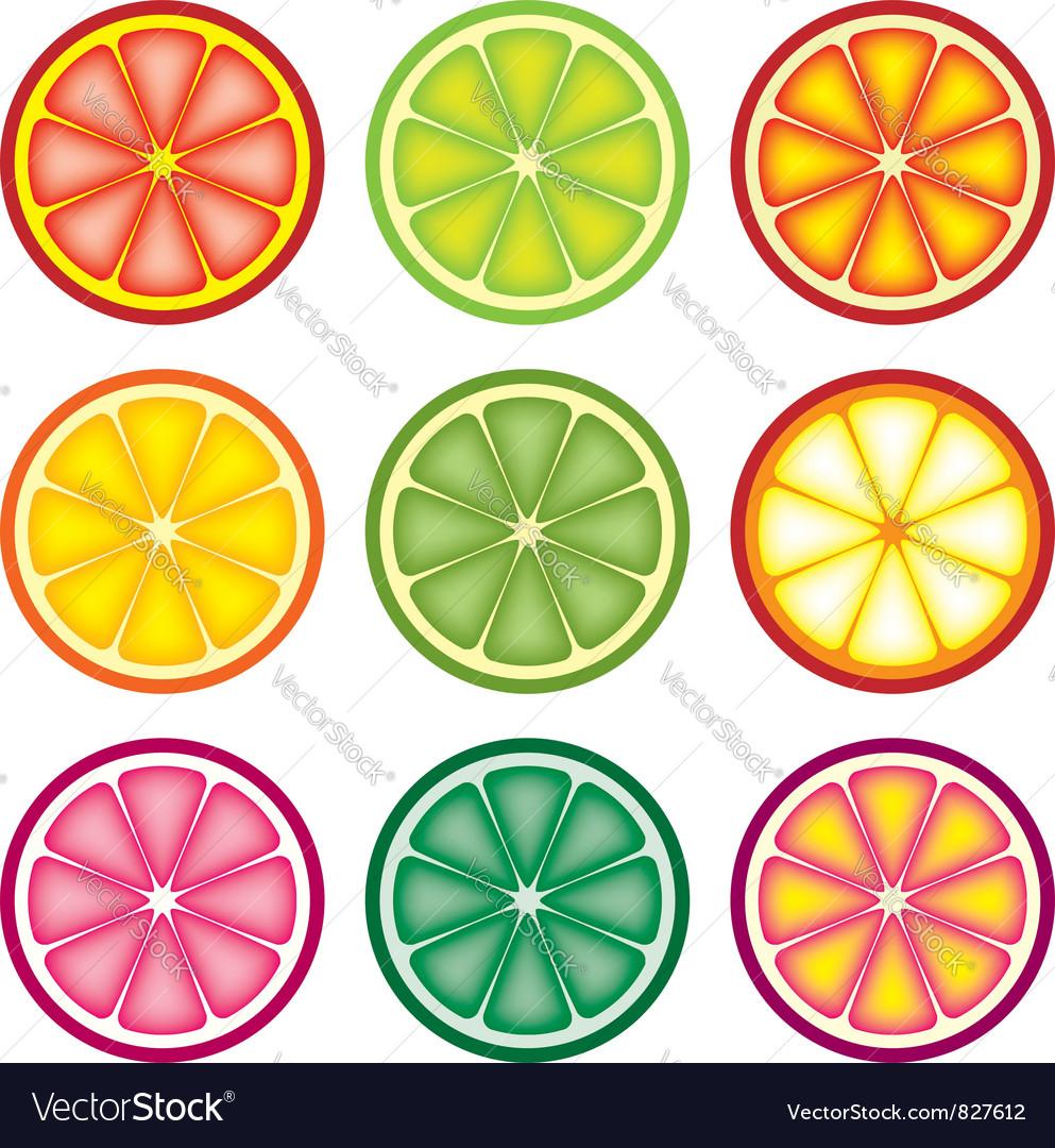 Colorful citrus slices vector | Price: 1 Credit (USD $1)