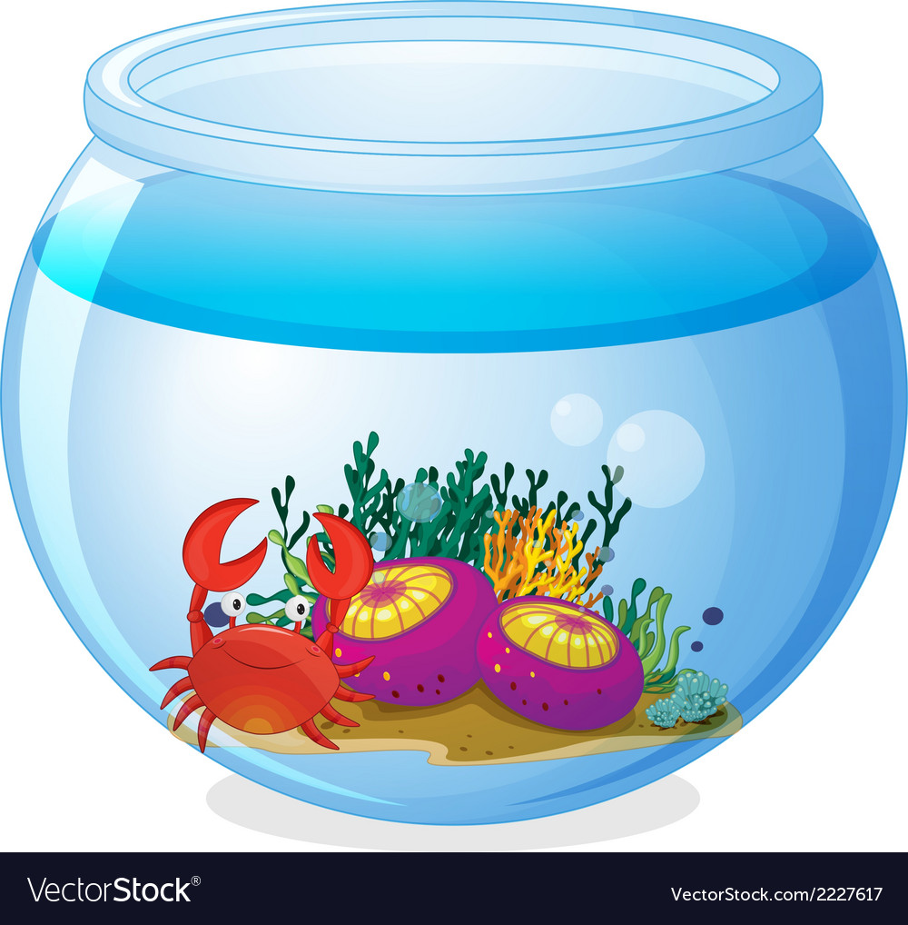An aquarium with sea creatures vector | Price: 1 Credit (USD $1)
