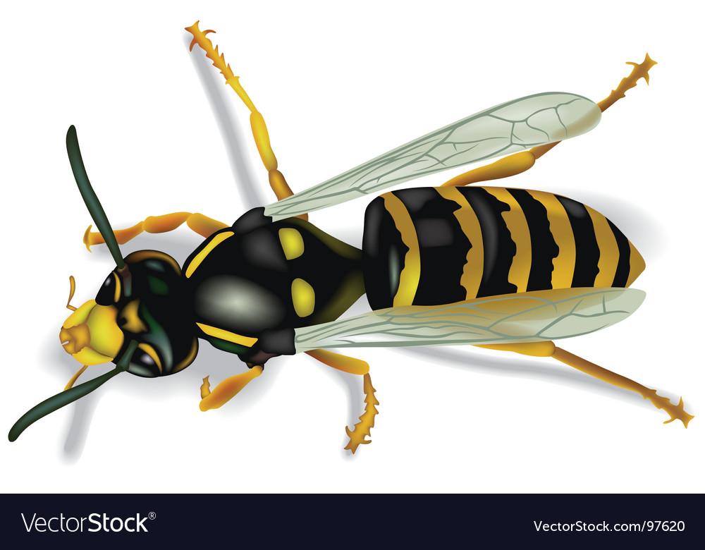 Wasp vector | Price: 1 Credit (USD $1)