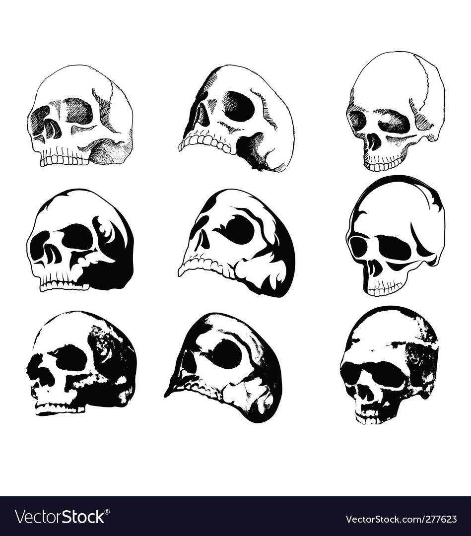 Skulls vector | Price: 1 Credit (USD $1)