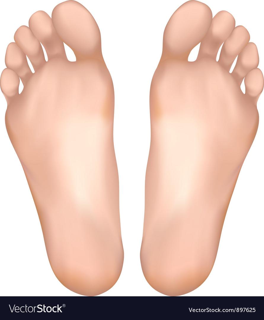 Healthy feet vector | Price: 1 Credit (USD $1)