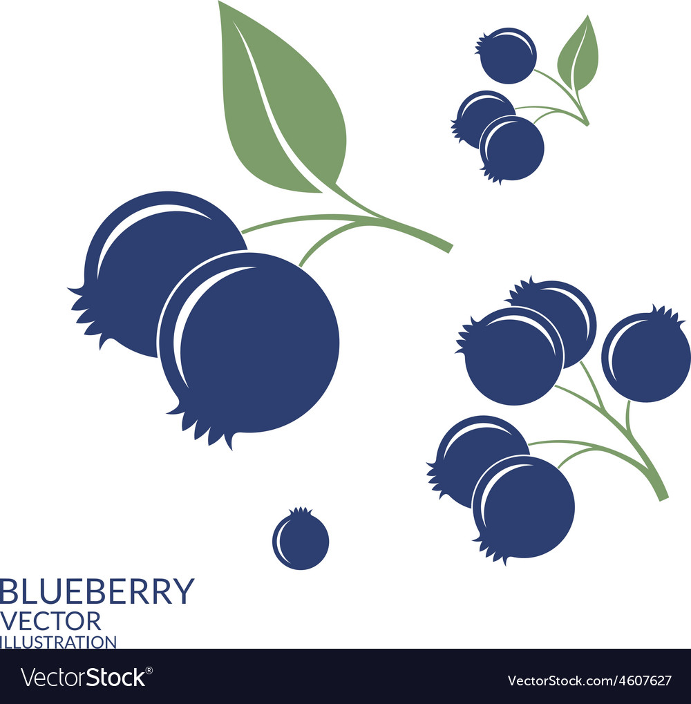 Blueberry set vector | Price: 1 Credit (USD $1)