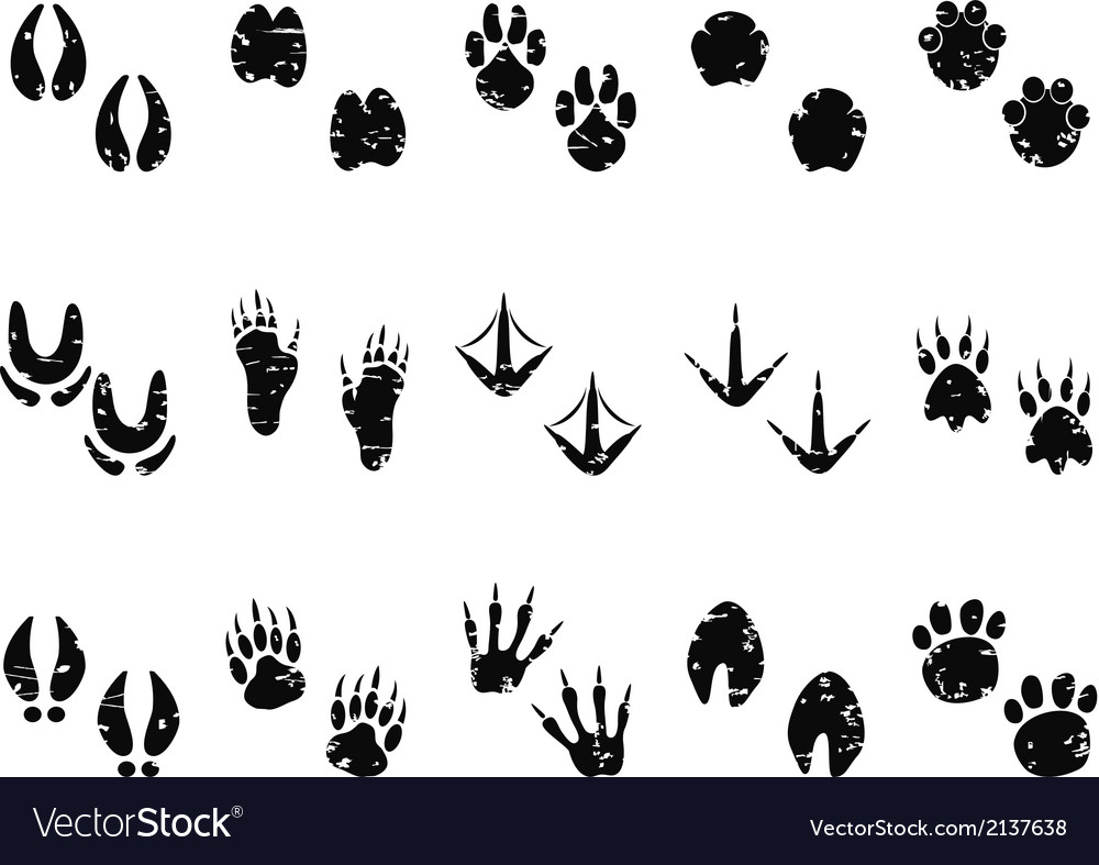Grungy animal footprint track icon vector | Price: 1 Credit (USD $1)