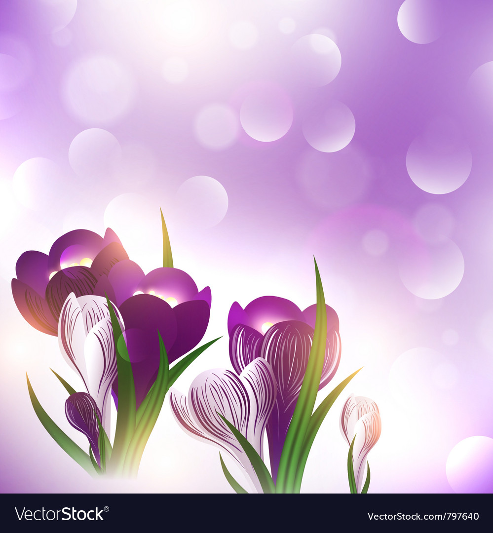 Crocus flower over bright background vector | Price: 1 Credit (USD $1)