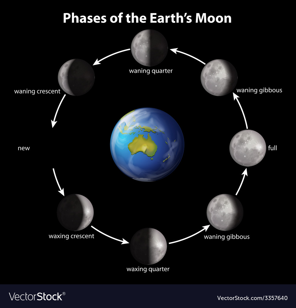 Phases of the earths moon vector   Price: 1 Credit (USD $1)