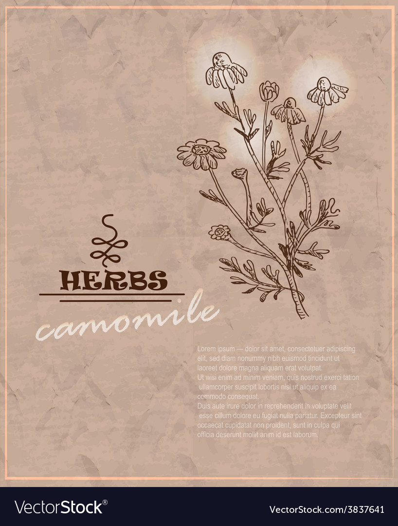 Vintage background with camomile on old paper vector | Price: 1 Credit (USD $1)