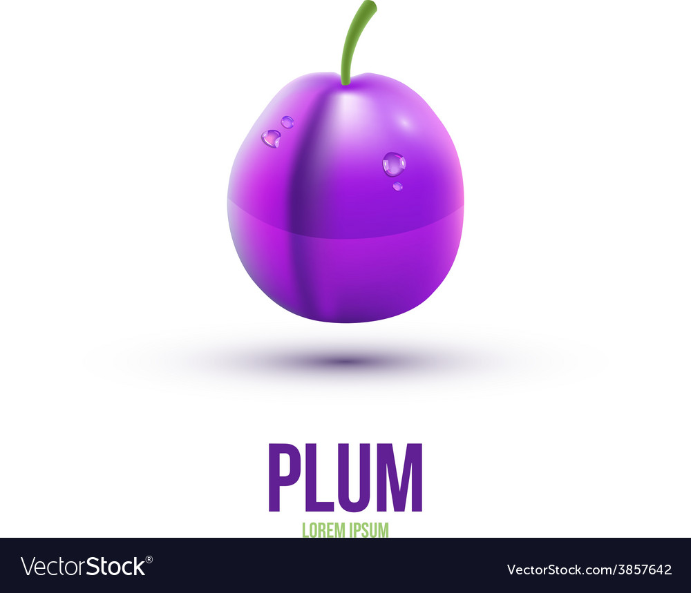 Realistic plum isolated on white background vector | Price: 1 Credit (USD $1)