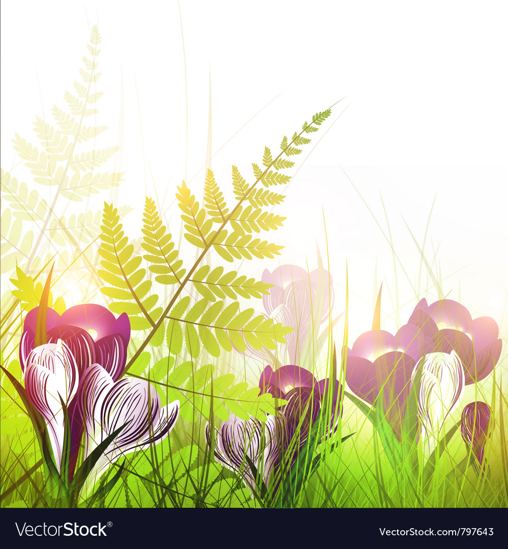 Spring meadow with crocus flowers vector | Price: 1 Credit (USD $1)