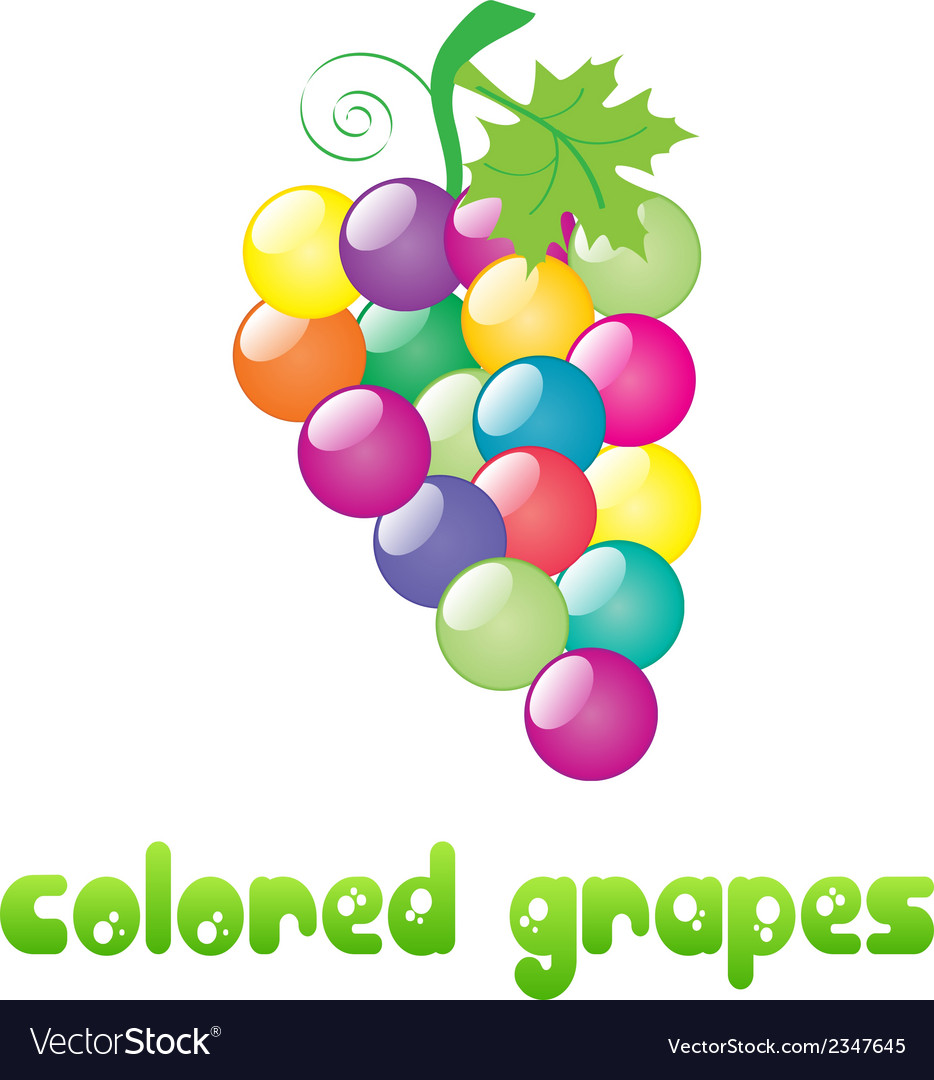 Colored-grapes vector | Price: 1 Credit (USD $1)