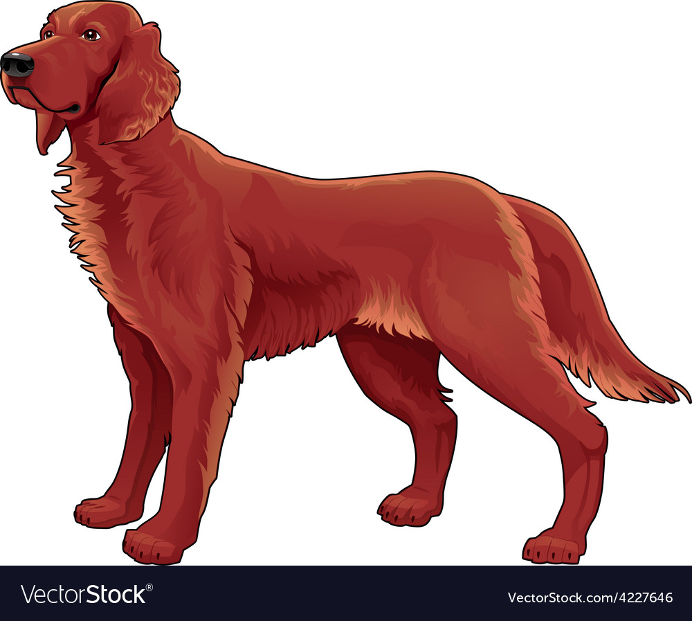 Irish setter vector | Price: 3 Credit (USD $3)