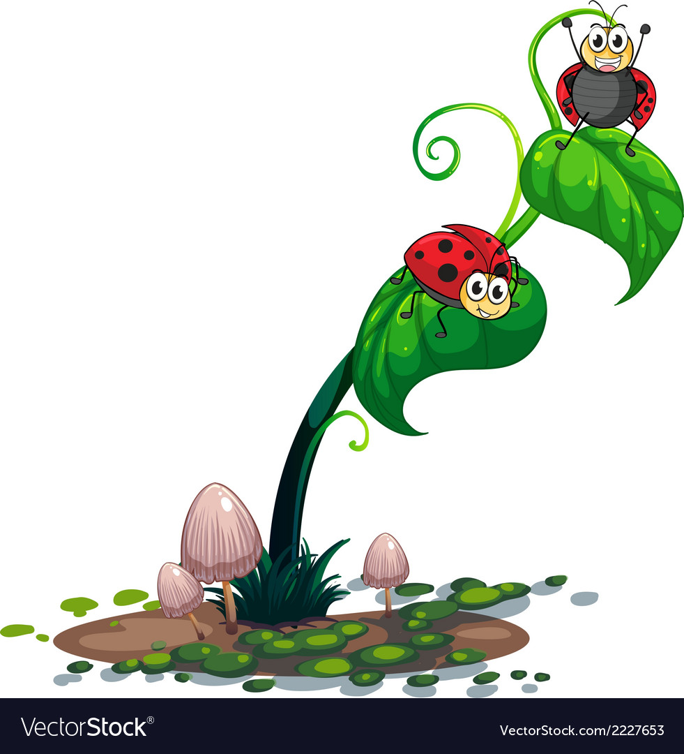 A plant with bugs vector   Price: 1 Credit (USD $1)