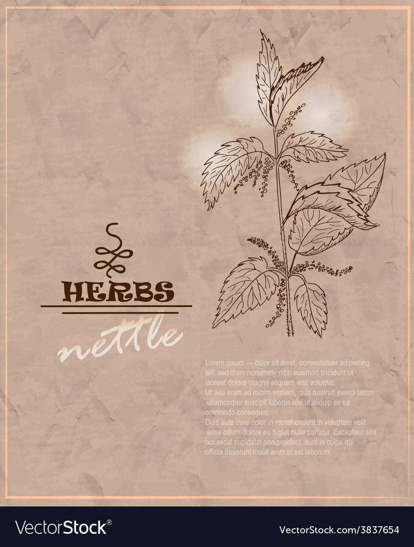 Vintage background with nettles on old paper vector | Price: 1 Credit (USD $1)