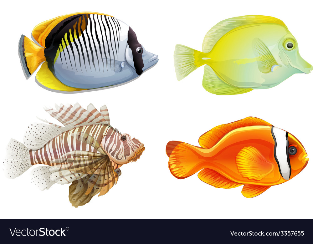 Tropical fish vector | Price: 3 Credit (USD $3)