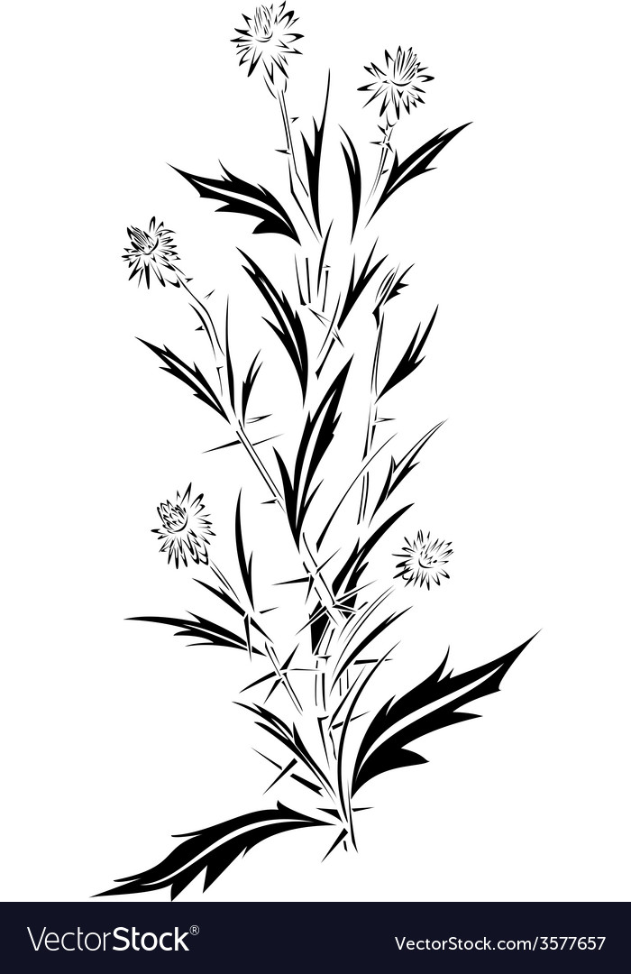 Thistle tattoo design vector | Price: 1 Credit (USD $1)