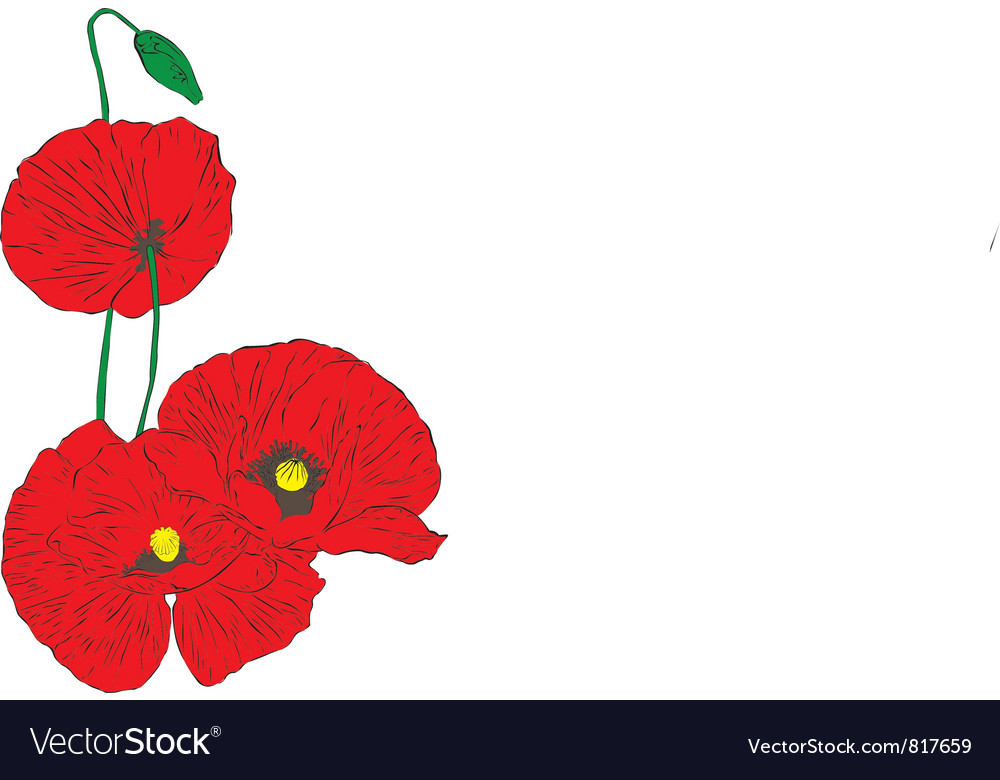Poppies on a white background vector