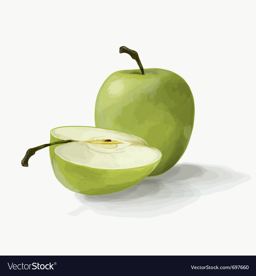 Beautiful green apples vector | Price: 1 Credit (USD $1)