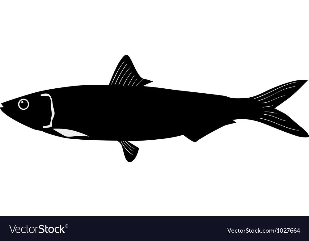 Silhouette of sardine vector   Price: 1 Credit (USD $1)